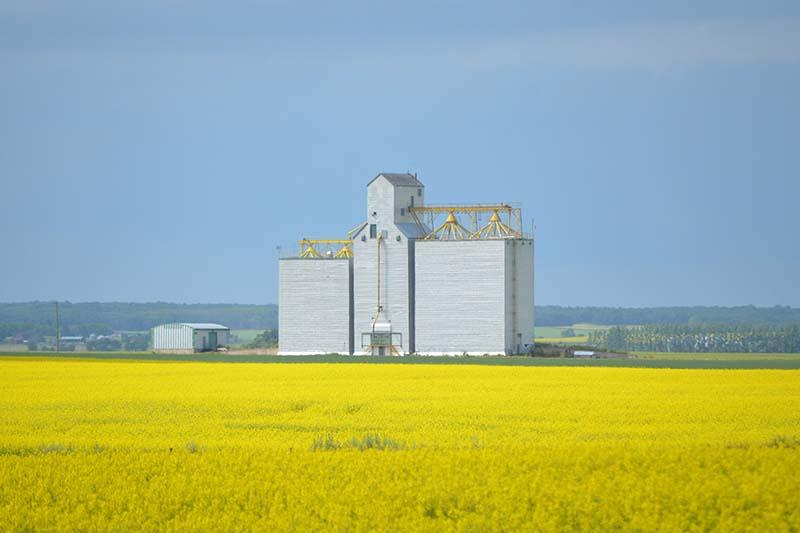 Grain elevator at Nesbitt, MB