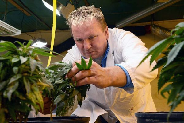 photo shows Darrin Stewart with marijuana plants at his grow operation south of Brandon MB (photo Glen Kirby)