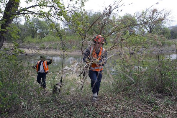 photo shows summer students hauling debris from the bird sanctuary in Souris, which is being returned to parkland (photo Glen Kirby)